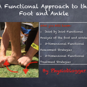 The Foot and Ankle in Function