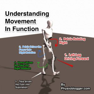 Understanding Movement in Function