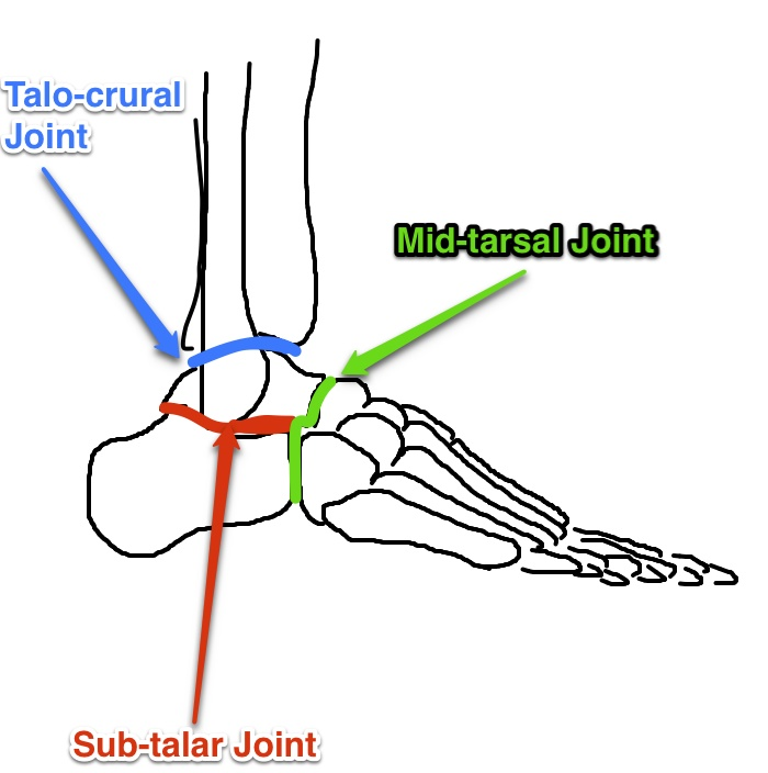 Foot Mechanics in Gait: Foot Joints