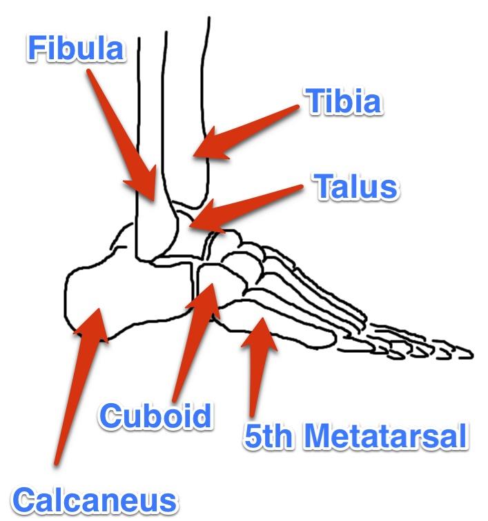 front foot in gait